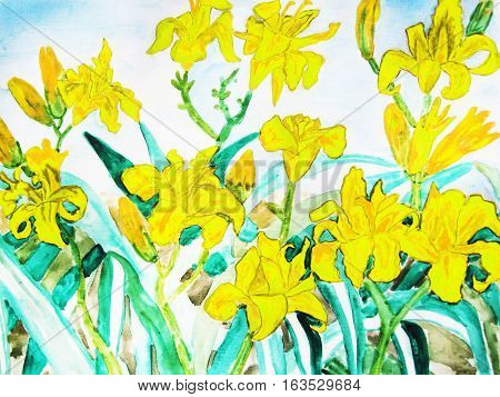 Yellow daily lilies hand drawn painting water colours.