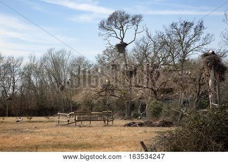 Bird's Nest. Wetland in Girona province. Spain