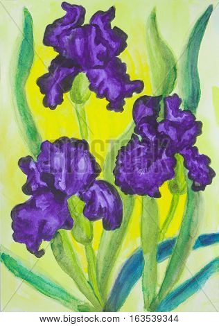 Watercolor painting three violet irises on yellow background.