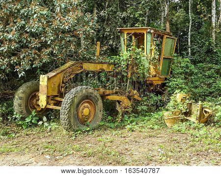 Abandoned large yellow grader overgrown by jungle vegetation near border between Nigeria and Cameroon, Africa.