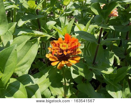 Bright Orange Flower among leaves in a park in Westerville Ohio