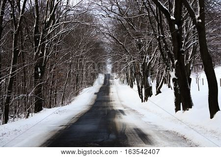 Blacktop road going through a snow covered forest.