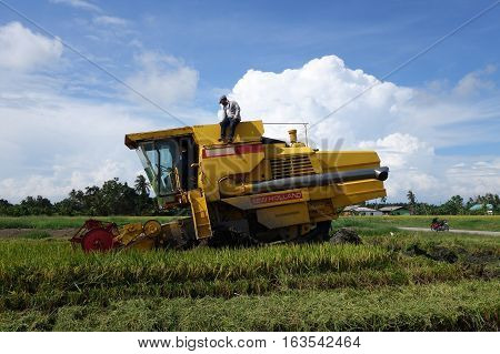 Worker Uses Machine To Harvest Rice On Paddy Field