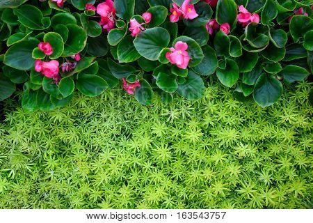 Closeup Flower and Gold moss sedum texture background