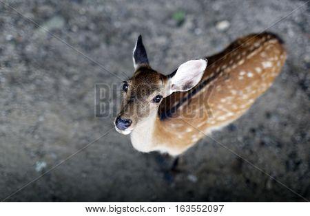 Looking down on Tame Deer Nara Japan