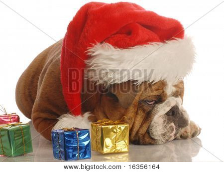 english bulldog with christmas presents and scrooge expression