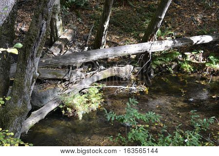 A natural dam formed by fallen trees in a Northern California forest