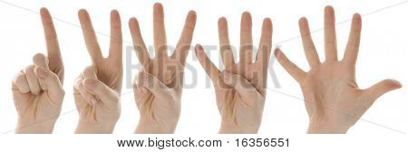 counting hands from one to five on white background