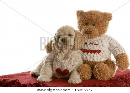 american cocker spaniel puppy being loved by stuffed teddy bear on white background poster