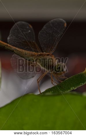 Closeup of the dragonfly perch on the green bough background natural