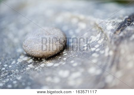 Water drops on a grey rounded stone on a rock