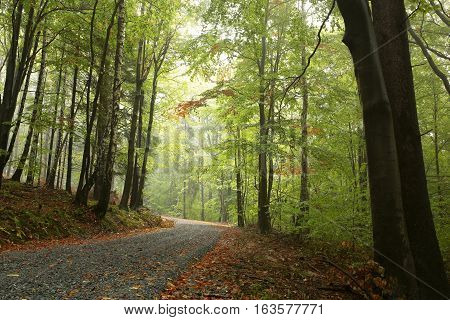 Path through the autumn forest on a misty day