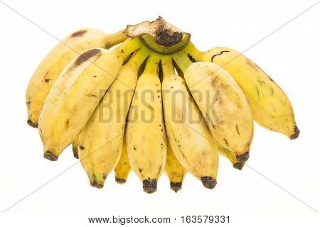 Big Bundle Banana