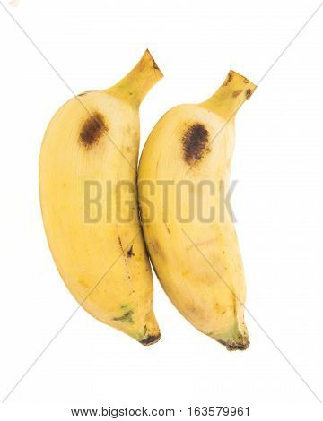 Two Yellow Bananas