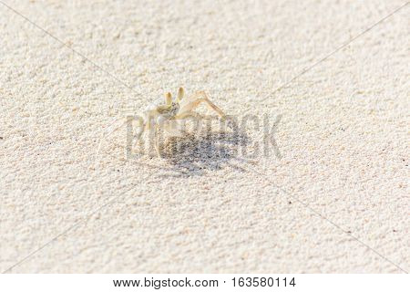 A Small Crab on the Sand Beach