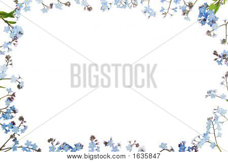 Forget-Me-Not (Floral Ornament)