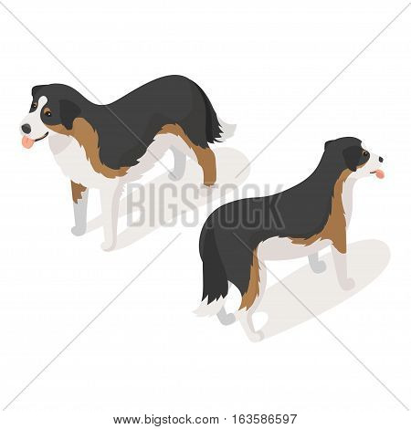 Isometric 3d vector illustration of sheep dog isolated on white background. Icon for web. Back and front view.