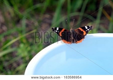 Vanessa atalanta. Red Admiral Butterfly is sitting on the edge of a blue bucket on a background of green grass on summer day closeup
