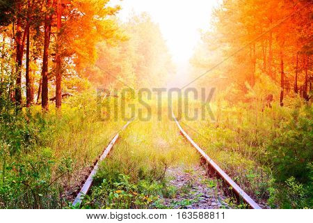 Railroad tracks through a forest in springtime nature