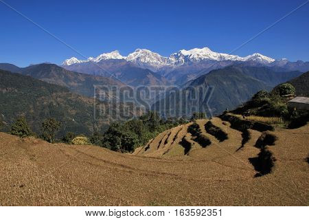 Autumn scene in the Annapurna Conservation Area. Mt Manaslu and other high mountains of the Himalayas. Rice terraces.