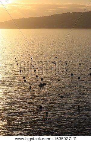 Neapolitan gulf , ITALY a Mediterranean mussel farm
