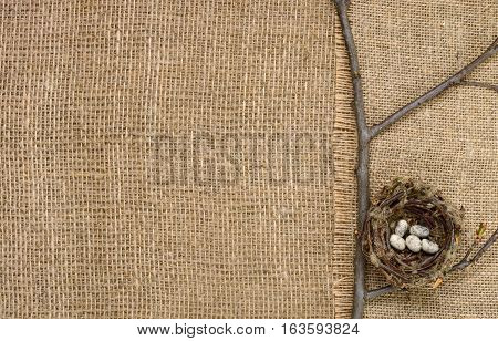 bird's nest on a branch on a background of burlap