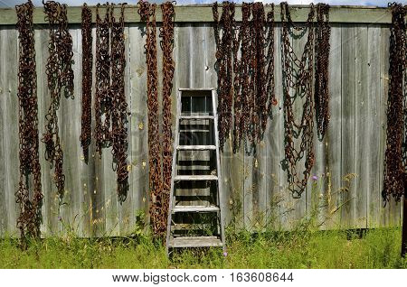 A rickety old wood step ladder leans against a weathered fence surrounded by various rusty chains.