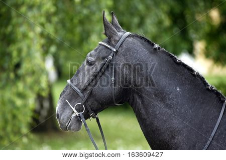 Side View Portrait Of A Beauty Young Stallion