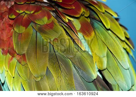 Colorful feathers. Parrot feathers background red yellow texture