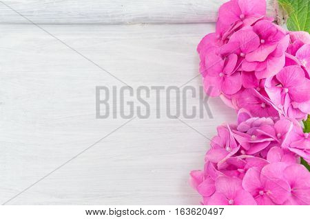 bunch of hortensia pink flowers on wooden background