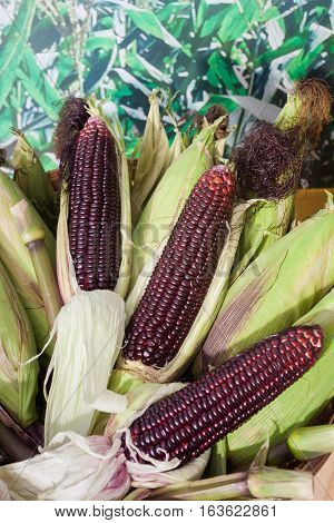 Raw purple corn on green background, stock photo