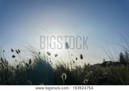 Beach grass silhouette backlit by glow of rising sun
