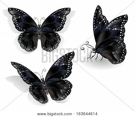 Set of realistic isolated black butterflies morpho on a white background. Design with butterflies.