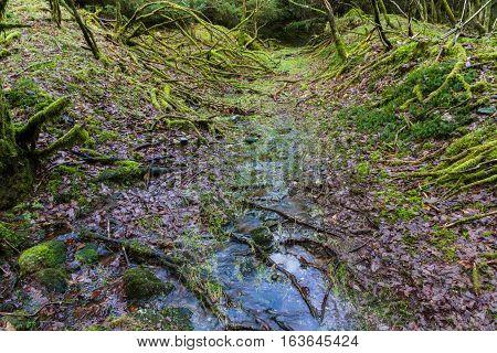 Waterlogged Path In Wood, Dartmoor