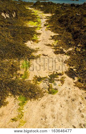 Path Through Seaweed On Beach.
