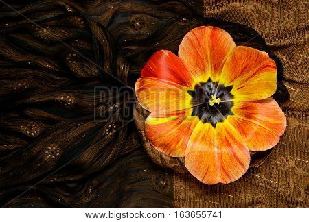 orange tulip on the background of brown silk