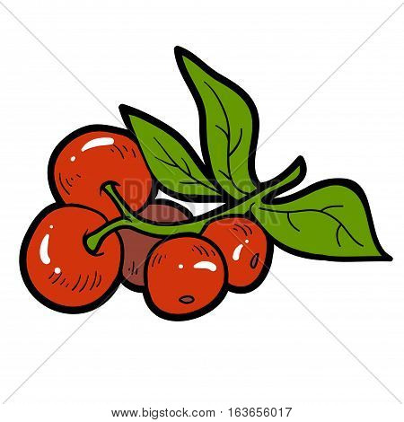 Color image with vector cartoon berry, Cranberries