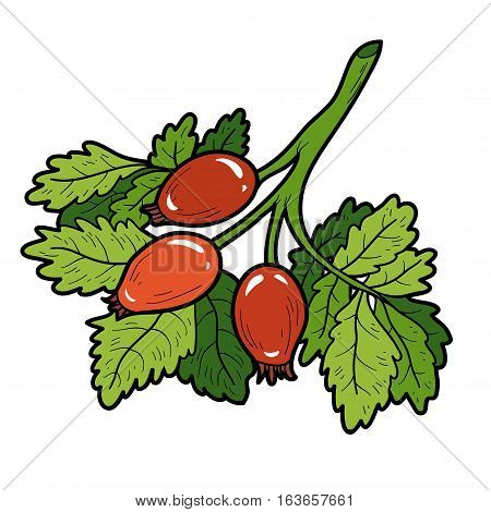 Color image with vector cartoon berry, Rosehip