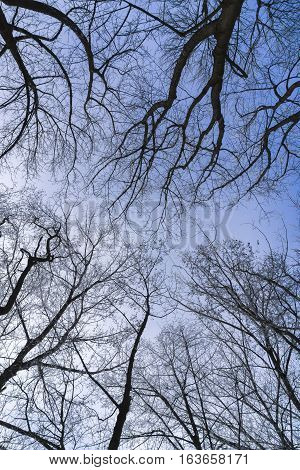 Frozen Nature in Winter. Closeup of Tree Tops in Winter  frozen, ice, winter, iced, cold, temperatures, ice-crystals, wintertime, christmas, xmas, season, holidays, outdoor, nature, branches, plants, closeup, forest