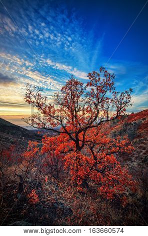 Mountain Landscape And Autumn Tree