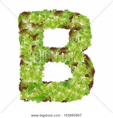 Letter B alphabet with hydroponics leaf ABC concept type as logo isolated on white background