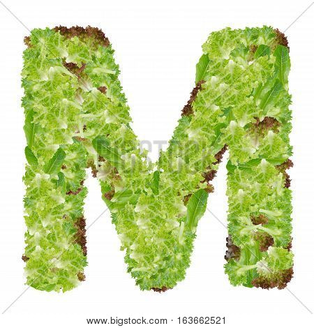 Letter M alphabet with hydroponics leaf ABC concept type as logo isolated on white background