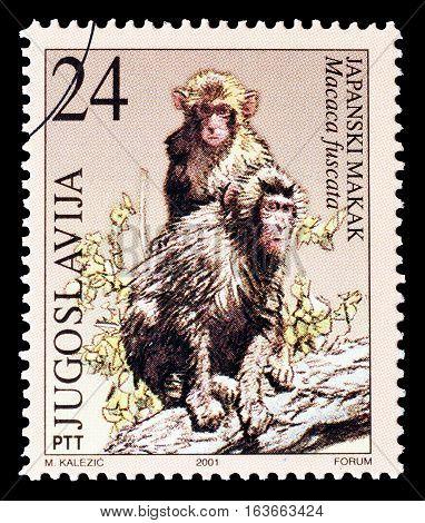 YUGOSLAVIA - CIRCA 2001 : Cancelled postage stamp printed by Yugoslavia, that shows Monkeys.