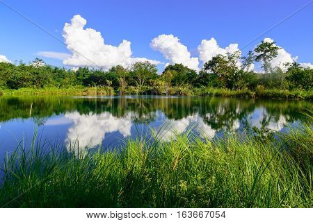 Clear Blue Lake In A Forest.