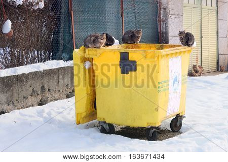 VETRINTSI VILLAGE, BULGARIA - JANUARY 01, 2017: Stray cats sit on the garbage container