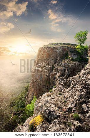 Big birds over mountain plateau at sunset