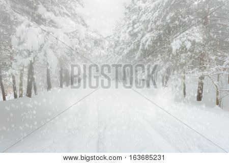 Snowy forest road high quality and high resolution studio shoot