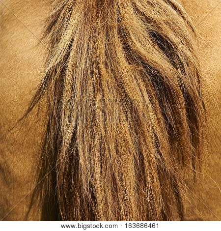 Horse tail and haunches close up. Animals background
