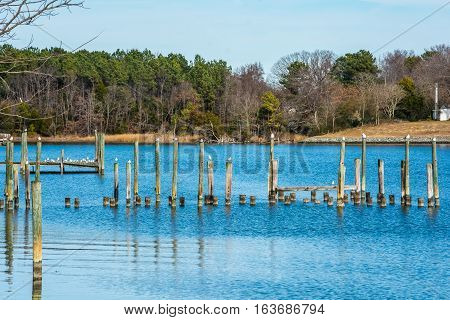 GULLS IN A ROW ON PILINGS IN RIVER TO THE CHESAPEAKE BAY