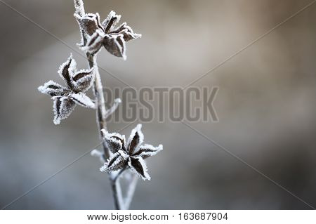 Close Up Of Frozen Plant